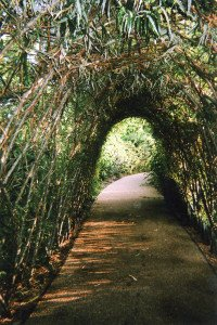 """Nature's Tunnel or Light and the End, Stratford"" di Ellen Rostant"