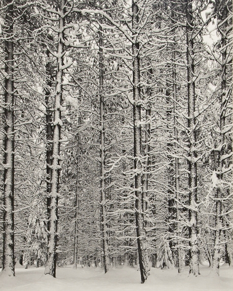 © Ansel Adams, ca 1933, Trees and Snow