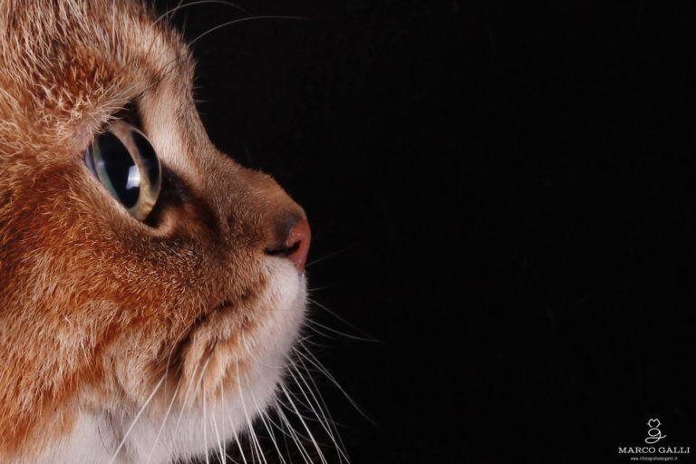 Intervista a Marco Galli,<br/> il fotografo dei gatti
