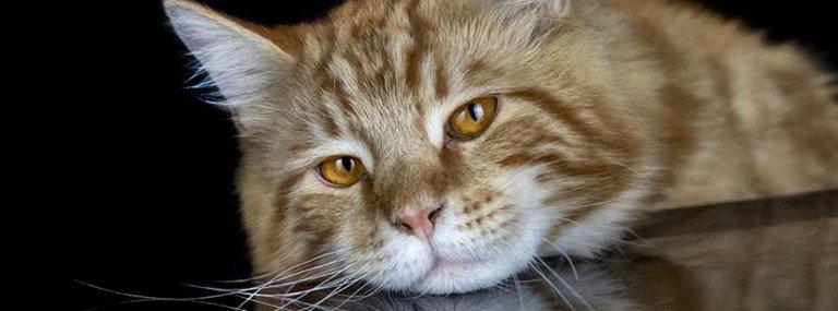 Claudia Rocchini, la Fotografa dei Gatti:  ritratti felini, ma non solo…