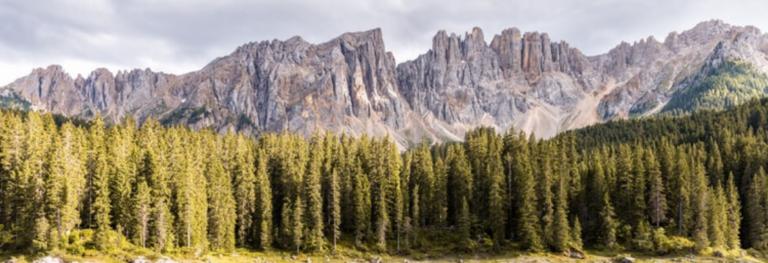 Cinque saggi da leggere su natura, ecologia e filosofia