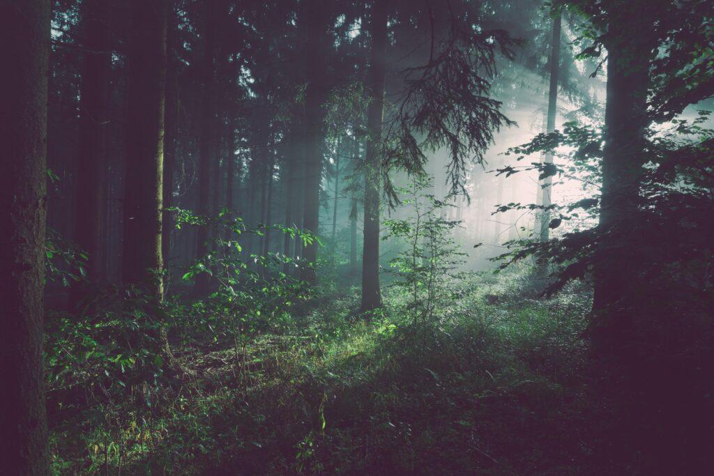 natura bosco